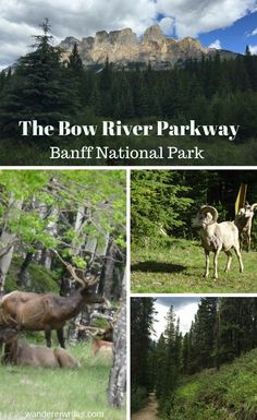 On the Bow River Parkway - Banff National Park - Wanderer Writes