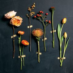 left to right: Campanella Garden Rose, Ranunculus, Ilex Berry, Pincushion Protea, Rose Hip Berry, Echinacea Pod, Tulip