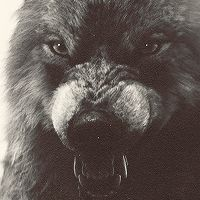 """ ✚ WOLF/WEREWOLF GIF HUNT ✚ "" As requested by myself, here is a gif hunt containing small, hq gifs of wolves/werewolves/shape-shifters. These gifs are from The Twilight Saga and can be used in. Jacob Black Twilight, Twilight Wolf Pack, Twilight Saga, Werewolf Hunter, Werewolf Art, Wolf Hybrid, Angry Wolf, Wolf Stuff, Wild Creatures"