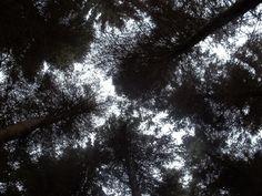 Swinsty woods