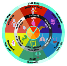 Chronobiology and the Science of Time: http://www.chronobiology.com/chronobiology-and-the-science-of-time/