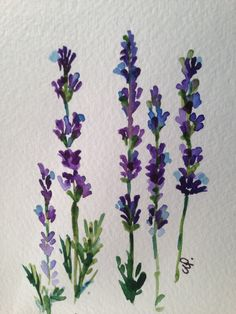 Lavender by gardenblooms Watercolor Cards, Watercolour Painting, Watercolor Flowers, Painting & Drawing, Tattoo Watercolor, Watercolours, Painting Inspiration, Art Inspo, Illustration