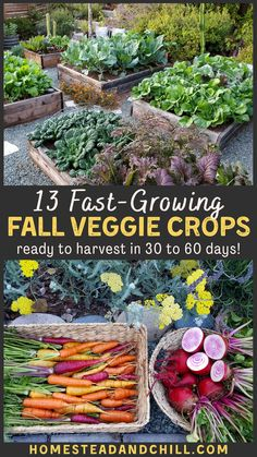 Up against the clock, with winter on the horizon? Don't let that stop you from gardening in the fall! Come discover the top 13 fastest growing cool season crops for your fall garden - some ready to harvest within 30 days or less. I also include tips on how to accelerate plant growth, and protect crops from early frost! #fallgarden #garden #gardentips #homestead #growfood Fast Growing Vegetables, Fall Vegetables, Growing Herbs, Veggies, Backyard Vegetable Gardens, Fruit Garden, Gardening For Beginners, Gardening Tips, Organic Gardening