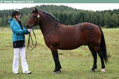 Estonian Native / Klepper - gelding Eller