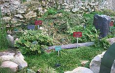 Jardin des plantes (Paris) Dans la serre de paléobotanique bâtie par Rohault de Fleury, cette présentation mêle fossiles et plantes à spores actuelles.