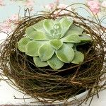 Perfect way to present a gift of Hens and Chicks or other succulents . or place on Christmas tree instead of the bird in nest Succulent Arrangements, Cacti And Succulents, Planting Succulents, Diy Garden Decor, Garden Art, Driftwood Christmas Tree, Christmas Tree Design, Christmas Ideas, California Garden