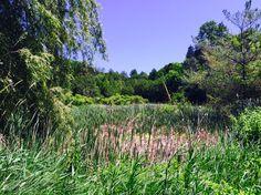 ❤️ Nature Spirits, Flowers Nature, Paths, Vineyard, Outdoor, Beautiful, Beauty, Outdoors, Vine Yard