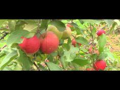 ▶ Autumn beautiful scenes in the springtime - YouTube