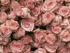 薔薇大好き