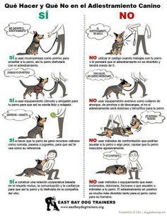 Que hacer y que no hacer en el adiestramiento canino
