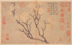 明 沈周 玉蘭, Magnolia, Shen Zhou (1427-1509), Ming dynasty