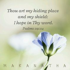 Psalms 119:114 (KJV)  Thou art my hiding place and my shield: I hope in thy word.
