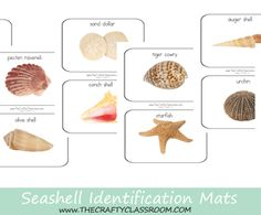 Sea Shell Sorting Mats.  Real Photo with shell names, great for Summer learning!