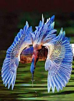 30 Ideas blue bird wings north america for 2020 Beautiful Creatures, Animals Beautiful, Cute Animals, Most Beautiful Birds, Pretty Birds, Exotic Birds, Colorful Birds, Exotic Pets, Exotic Animals