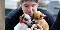 This Heroic Woman Chartered A Plane To Rescue 300 Animals In The Caribbean http://flip.it/mPGqhq
