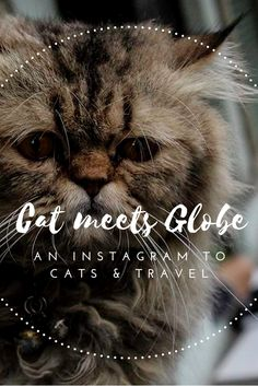 Looking for the best cat pictures and travel around the world? Look no further but meet Cat meets Globe, for your daily Instagram cat-spiration.  Click through to see more furry images from around the globe.