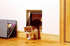 Cat-Friendly House Design (7) 4