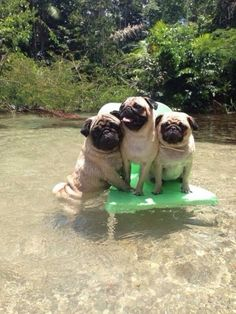 However someone got these three to pose for this photo is a genius! How cute they are!