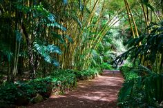 Maui, Hawaii - Bamboo Forest - Marie Glodt Travel to Maui