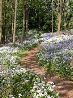 Woodland Path - Longwood - Somerset, England