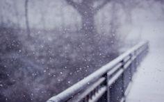 snowy snowy day.