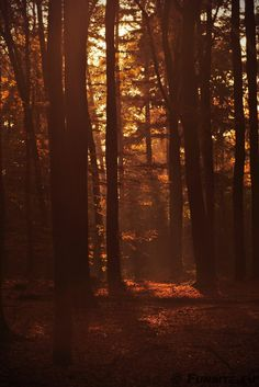 Towards the light by Gerhard Hoogterp