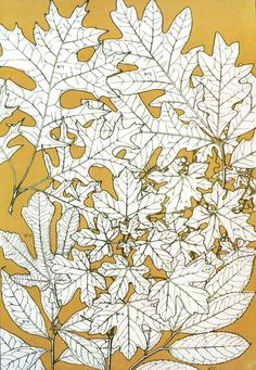 'Leaves from nature' from 'The Grammar of Ornament' by Owen Jones, published in Owen Jones, Chromotherapy, Realistic Drawings, Botanical Illustration, Planting Flowers, Photo Art, Nature, Moose Art, Leaves