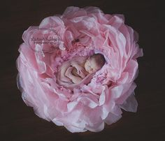 Giant flower with baby
