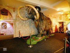 Museo del Mamut (Barcelona)