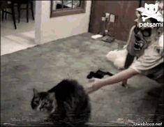 pinkpanthress:  lawebloca:  Cat is horrified by masked man (viaPetsami )   :3