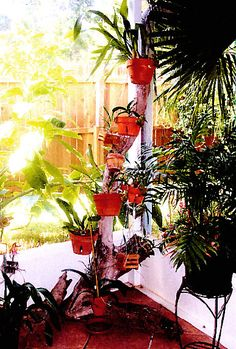 Use a fallen branch or a piece of driftwood to add color and life to a dull corner...Hang your flower pots with hangapot from hangapot.com Notice how the customer hung orchid baskets from the pots and hangers,