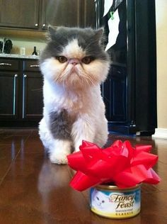 A grumpy-faced cat sitting in front of a can of Fancy Feast.