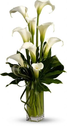 When it comes to sheer personality and charm, perhaps no other bloom can match the elegant calla lilies. In this original arrangement, callas is hown a stage of its own personality for that rare beauty of this calla liliy is known for. Church Flowers, Funeral Flowers, Wedding Flowers, Lily Wedding, April Wedding, Ikebana, Lys Calla, Calla Lillies, Lilies Flowers