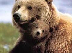 bear baby - Google keresés