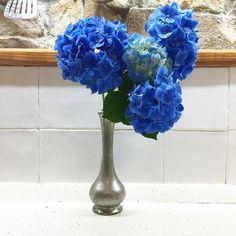 #blue #hortensias #asturias