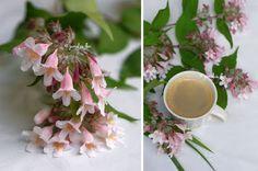 #ceascacafea #pink #roz My Flower, Flower Arrangements, Bouquet, Garden, Plants, Pink, Floral Arrangements, Garten, Bouquet Of Flowers