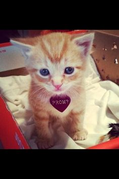 OHHH MY GOSH. Yes. Yes. Yes. THOUSAND TIMES YES. Get me a kitten or puppy and I'm yours forever.