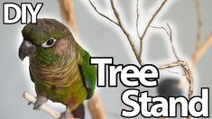 Parrot Tree Stand | DIY - YouTube Parrot Stand, Bird Stand, Parrot Toys, Parrot Bird, Budgies, Parrots, Conure, Bird Tree, Cat Toys