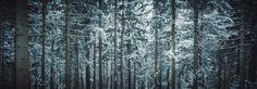 Into the Winter Forest at Kirchschlag/Linz Winter Forest, Kirchen, Blogging, Pictures, Photography, Linz, Woodland Forest, Handarbeit, Photos