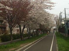 白石サイクリングロード(⌒▽⌒)