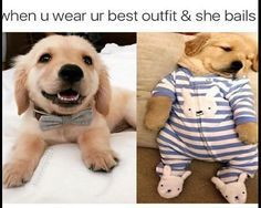 Animal Memes That Will Make You Laugh - 8