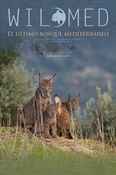 Wildmed: El último bosque mediterráneo