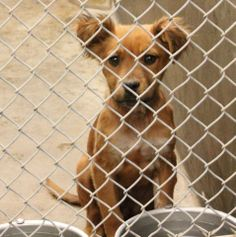 4 hrs left......~ FOSTERS DESPERATELY NEEDED - HAVE RESCUE ~~ 05/20/14 All these have rescue and are urgent!!! Please, we need fosters for 2 weeks or we can't get them out. If you can foster message us. Odessa, Texas.