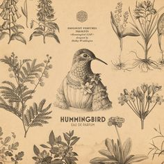 Zoologist Perfumes' Hummingbird EDP, designed by Shelley Waddington #zoologistperfumes #hummer #hummingbird #anthropomorphic #chypre #perfume #niche #nicheperfumes