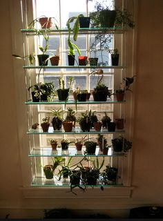 window shelving for orchids