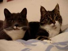 Miau zu zweit - YouTube I never get tired of this adorable cat conversation!