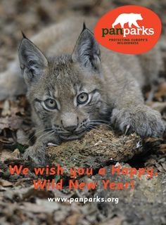 We wish you a Happy and Wild New Year!
