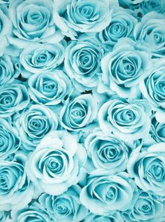 New flowers wallpaper iphone turquoise blue roses Ideas Wallpaper Tumblrs, Wallpaper World, Phone Background Wallpaper, Blue Wallpaper Iphone, Blue Wallpapers, Pretty Wallpapers, Aesthetic Iphone Wallpaper, Flower Wallpaper, Blue Backgrounds