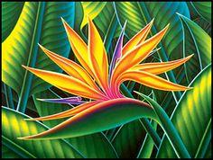 Hawaiian gourmet Gift baskets and Art with Steve Irvine, Alex Steelsmith and from hawaiianmagic.net-send Hawaiian Art and Goodies.