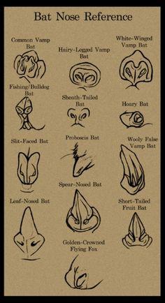 Bat Nose Reference  http://www.batsrule.org.au/megabats-types-au/